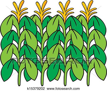 clipart of corn stalk k15379202 search clip art illustration rh fotosearch com Corn Clip Art corn stalk clip art free