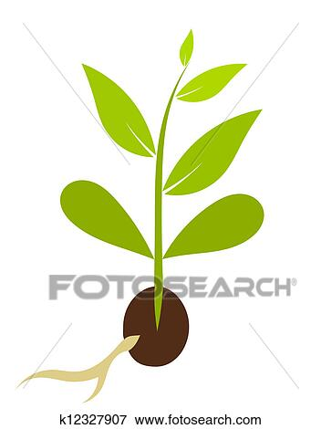 Mustard Seed Clipart
