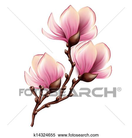 magnolia branch clip art - photo #8