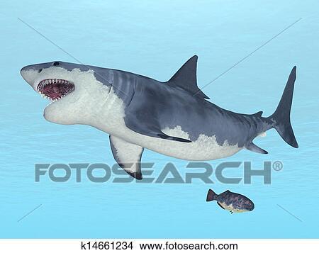 Dessins grand requin blanc k14661234 recherche de clip arts d 39 illustrations et d 39 images - Dessin de grand requin blanc ...