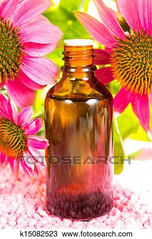 stock foto echinacea pflanze extrakt k15082523 suche. Black Bedroom Furniture Sets. Home Design Ideas