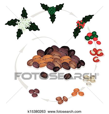roasted coffee beans clip art � cliparts