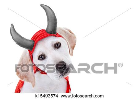 Banque de photo halloween chien d guisement k15493574 recherchez des images des - Deguisement halloween chien ...