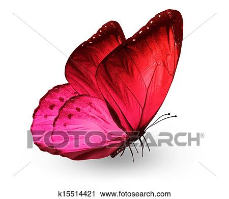 Clipart of Red pink butterfly k15514421 - Search Clip Art ...