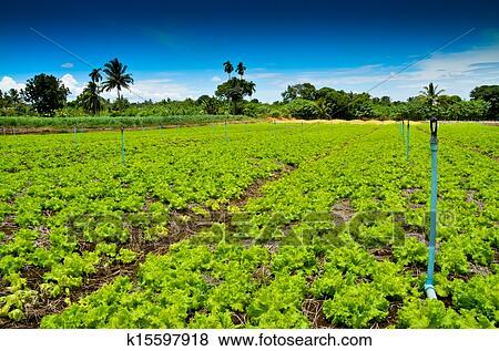 Essay On Organic Farming