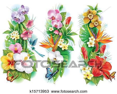 tropical clip art illustrations. , tropical clipart eps, Natural flower