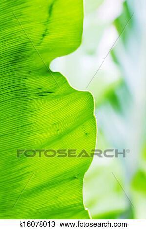 叶片下表皮结构图象