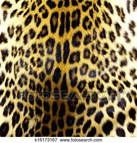 图片- 豹皮肤, 结构