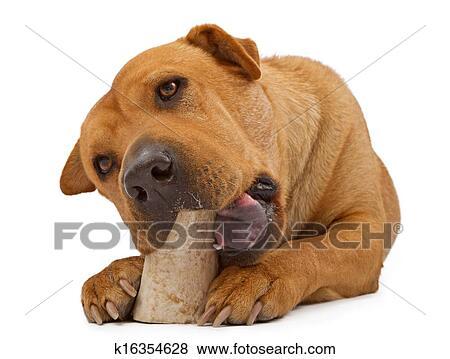 bilder akitas und shar peis mischling hund kauen knochen k16354628 suche stockfotos. Black Bedroom Furniture Sets. Home Design Ideas