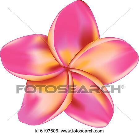 Clip art of plumeria flower k16197606 search clipart illustration pink plumeria frangipani tropical flower on white background mightylinksfo Choice Image