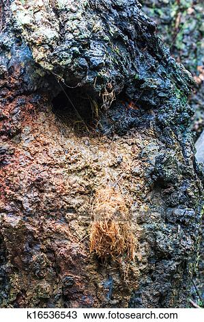 stock foto flughoernchen nest von baumstamm loch an doi inthanon nation k16536543. Black Bedroom Furniture Sets. Home Design Ideas