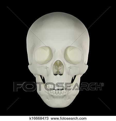 手绘图 - 头骨