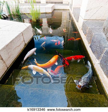 Archivio di immagini pesci di koi stagno k16913346 for Pesci di stagno