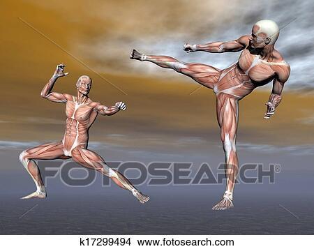 手绘图 - 男性, 肌肉,图片