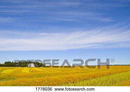 Field Crops Clipart Crop Cut in Rows in Field
