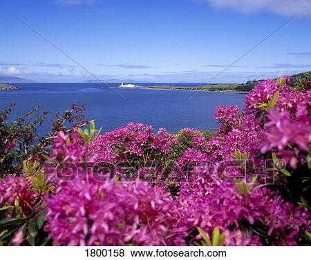 Pictures of valentia lighthouse from the glanleam gardens for Garden design kerry