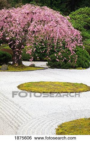 Stock Images Of Portland Oregon United States Of America Spring Blossoms At Portland Japanese