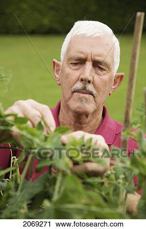Kolekcje fotografii - niejaki, człowiek, fabryka, w, jego, Garden;, Naas, Kildare, irlandia - 2069271