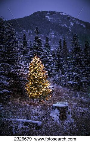 lighted christmas tree in forest of snow covered trees in winteralaska united states of america - Snow Covered Christmas Trees