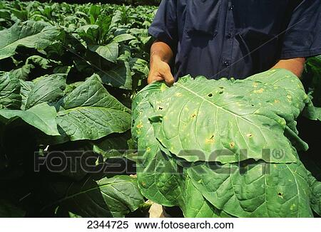 Agricultural Crops Images Agriculture Crop Disease