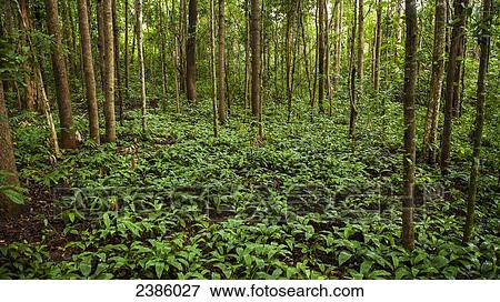 Jungle Floor; Sen Monorom, Mondulkiri, Cambodia