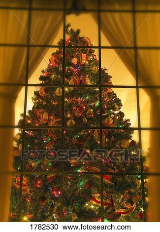 Stock Photography Of Looking At Indoor Christmas Tree