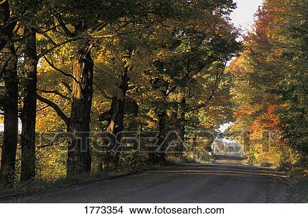 Stock photo of autumn trees 1773354 search stock images for Autumn tree mural