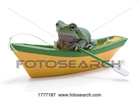 Picture   A Frog In A Toy Boat. Fotosearch   Search Stock Photography,  Photos