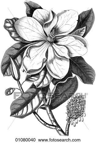 Black Tree And Flower Illustrations 66