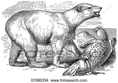 Carnivorous animals drawing
