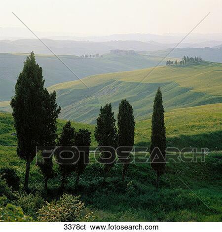 Banque d 39 images italie toscane cypr s arbres sur - Cypres d italie totem ...