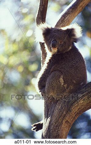 images ballarat wildlife - photo #32