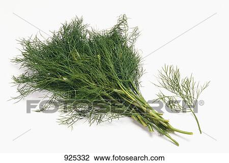 how to cut fresh dill from plant