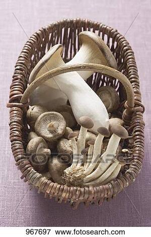 bild unterschiedliche arten von pilze in korb 967697 suche stockfotografie fotos. Black Bedroom Furniture Sets. Home Design Ideas