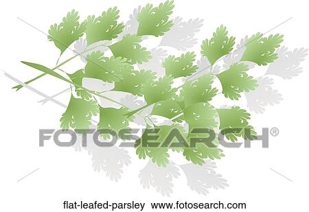 banque d 39 illustrations persil pouss feuilles plat flat leafed parsley recherche de clip. Black Bedroom Furniture Sets. Home Design Ideas