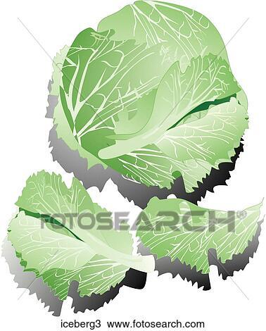iceberg lettuce shadows iceberg3 foodshapes illustrations photograph    Iceberg Lettuce Drawing
