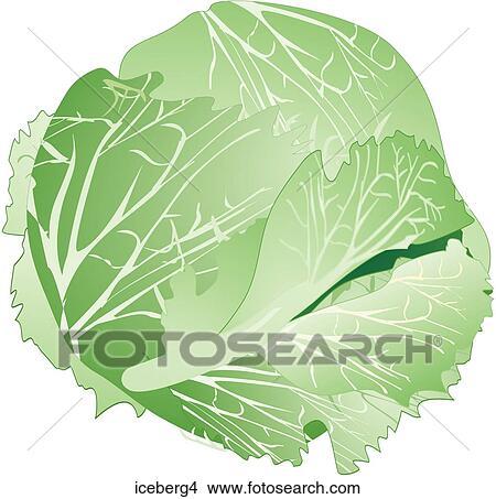 iceberg lettuce one iceberg4 foodshapes illustrations photograph    Iceberg Lettuce Drawing