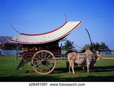 Bullock Carts Images Bullock Cart on The Padang