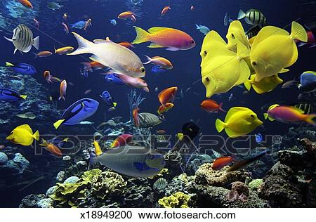 Banques de photographies poisson tropical dans g ant for Gros poisson aquarium