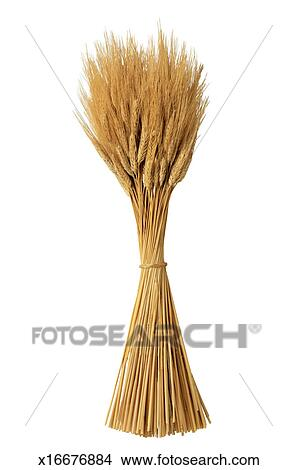 Stock Photo of Bundle of Wheat x16676884 - Search Stock ...