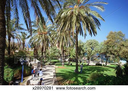 Israel, Tel Aviv, Jaffa, Abrasha Park, Palm trees in a park