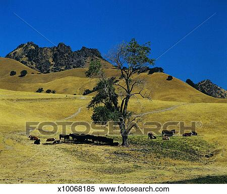 Stock image of countryside near yuba city california usa Usa countryside pictures