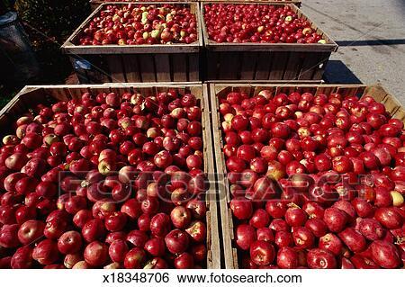 banque d 39 images caisses de pommes rouges x18348706 recherchez des photos des images des. Black Bedroom Furniture Sets. Home Design Ideas