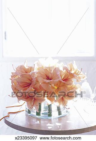 Immagine organizzato fiore di amarilli in rotondo - Finestra ovale e finestra rotonda ...