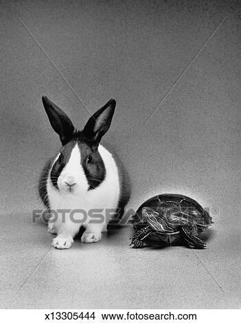 乌龟, 同时,, 兔子