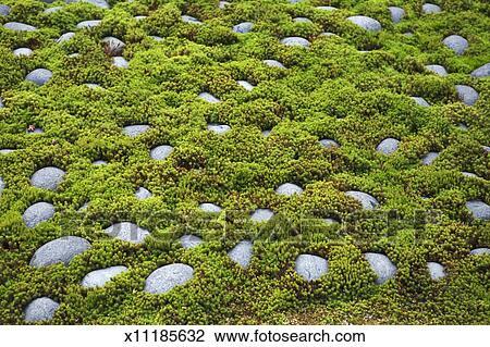 Banque de photo japon kyoto arishiyama sagano zen - Jardin japonais mousse ...