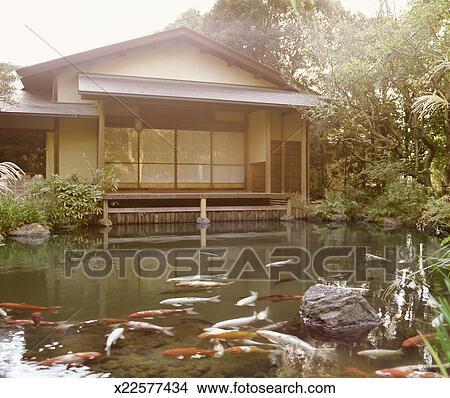 banque de photo tang koi carpes et typique japonaise maison x22577434 recherchez. Black Bedroom Furniture Sets. Home Design Ideas