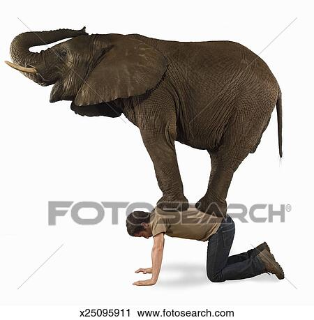 Stock Photography of Elephant standing on man, side view ...