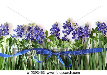 stock photo of bluebonnet border x12393453 search stock images rh fotosearch com Butterfly Clip Art Blue Flower Clip Art