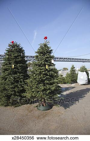 Stock Images Of Christmas Tree Lot Near Bay Bridge San Francisco  - San Francisco Christmas Tree Lots